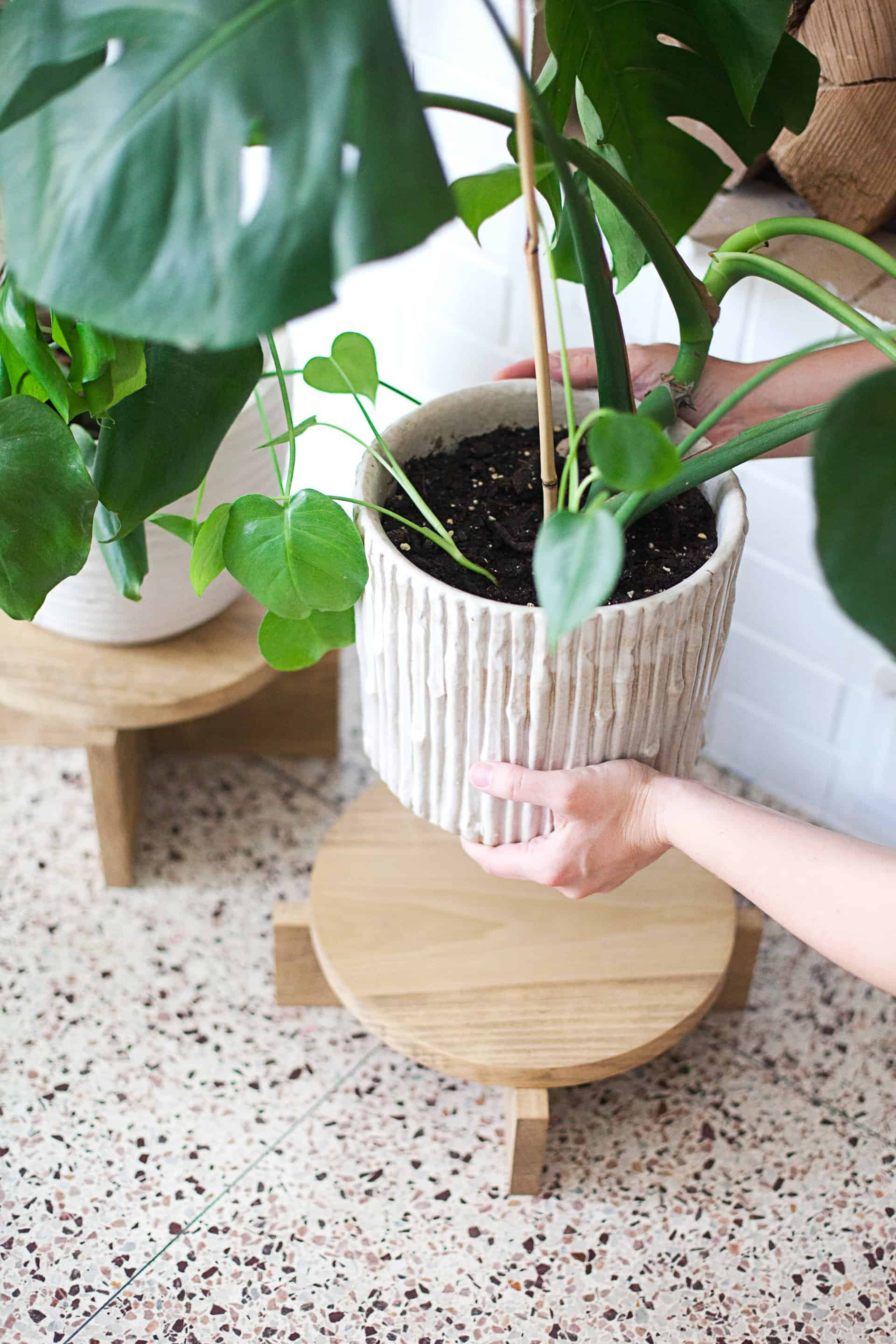 Diy Wooden Stands ~ Diy modern wood plant stands a beautiful mess