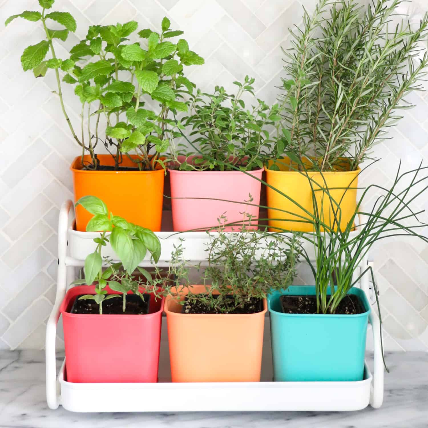 Make A Colorful Indoor Herb Garden Click Through