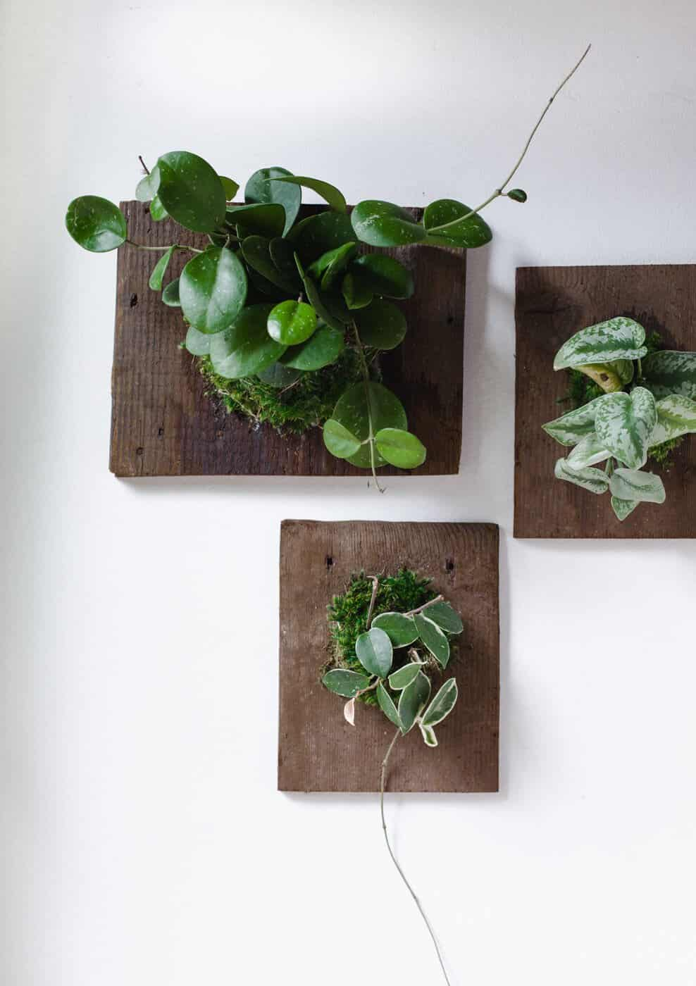 Diy Wall Mounted Plants Aka Living Art A Beautiful Mess