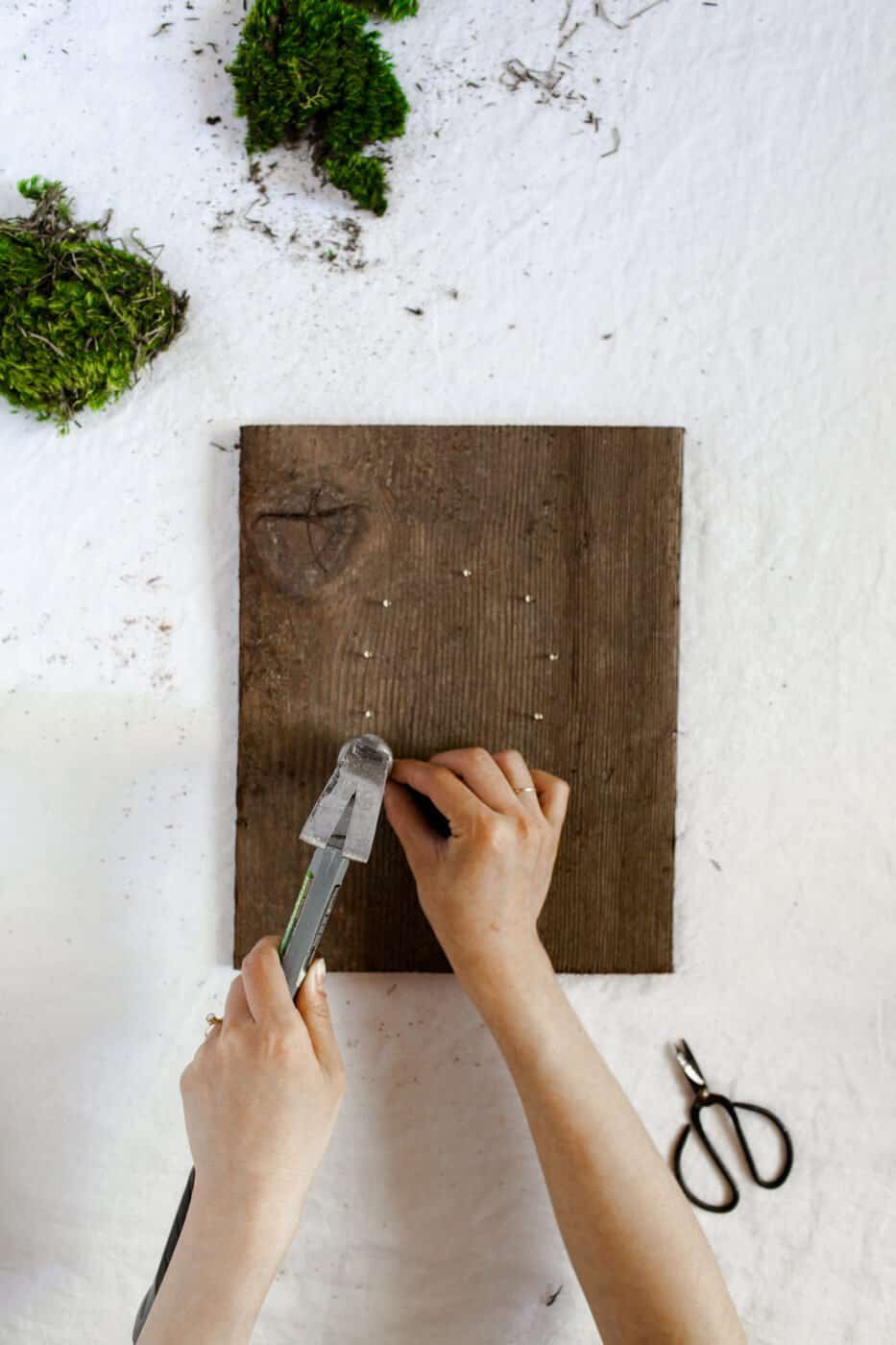 DIY-Wandpflanzen AKA Living Art