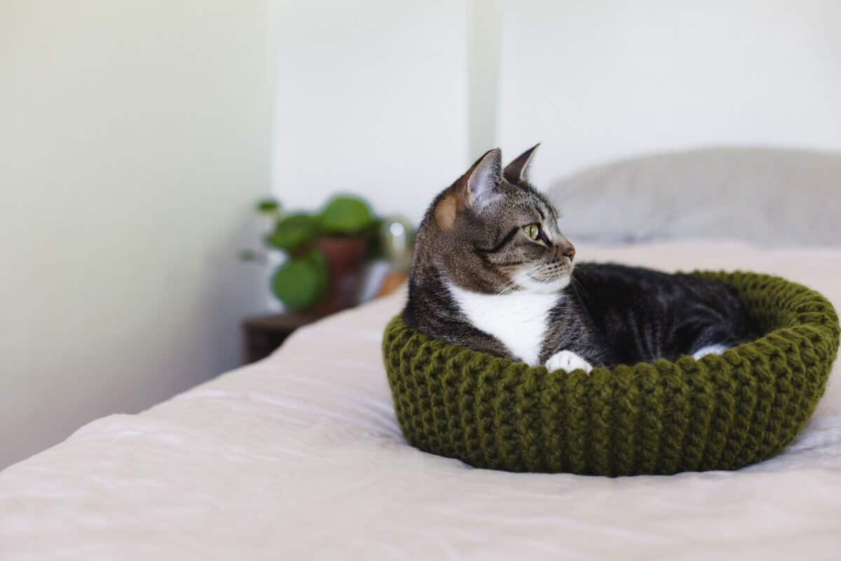 Awesome Cat Bed Knitting Pattern Adornment - Sewing Ideas - gotoss.info