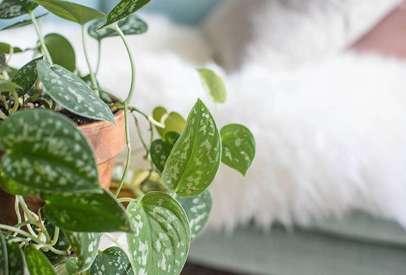 Dein Zimmerpflanze-Spiel mit Wasserausbreitung