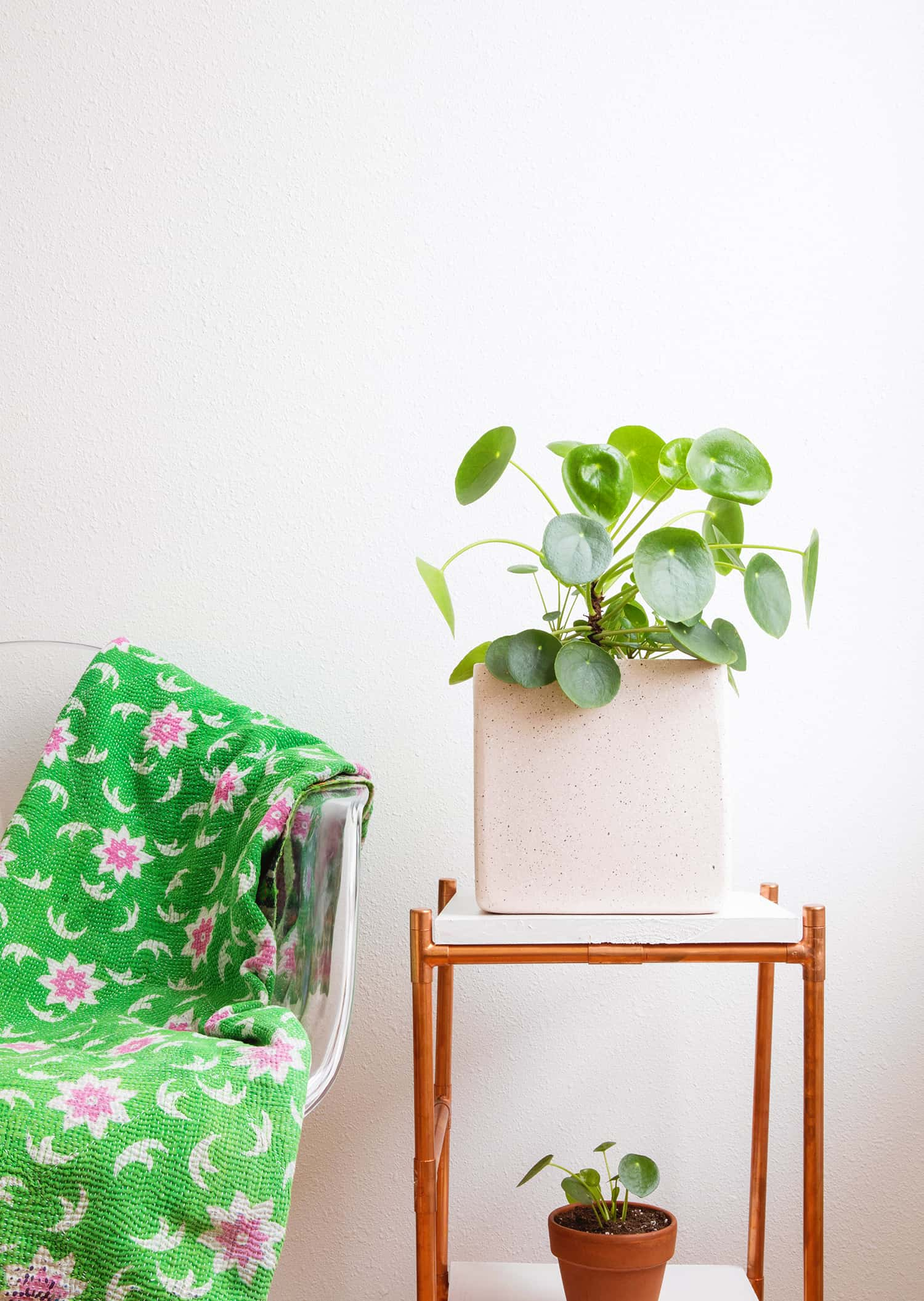 Caring for Pilea Plants