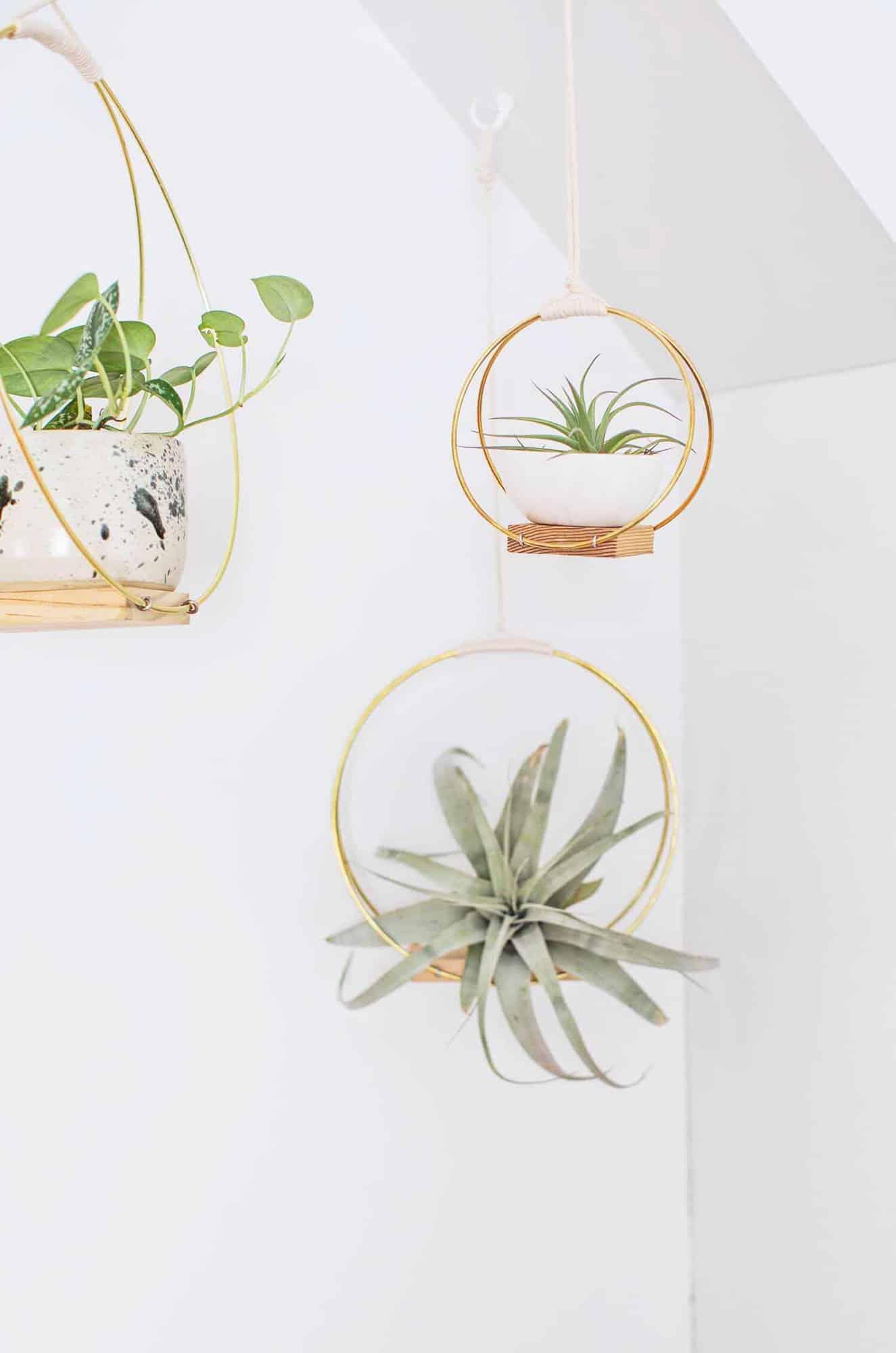 DIY brass ring planter