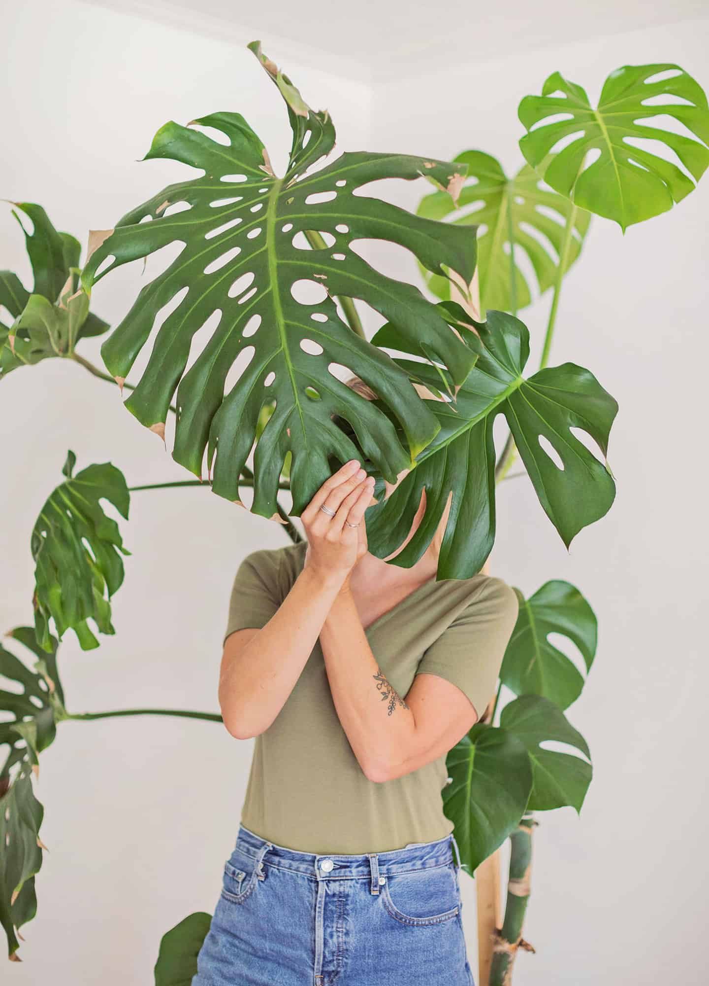 How To Care For Monstera Plants A Beautiful Mess