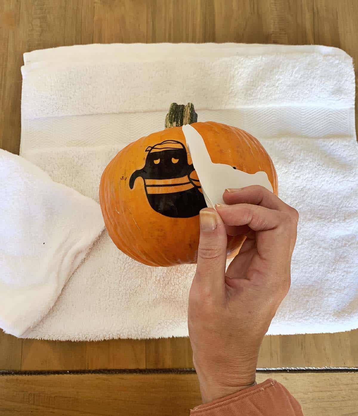Peeling the tattoo paper off the pumpkin