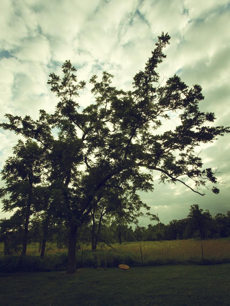 Gary&pat-tree
