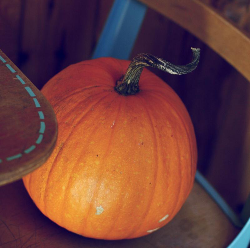 Elsie-pumpkin