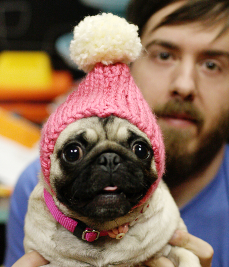 Dog-hat-3