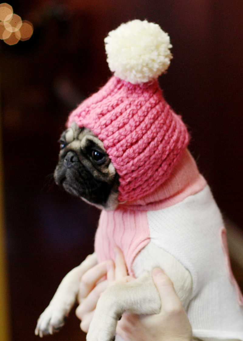 Puppy_hat