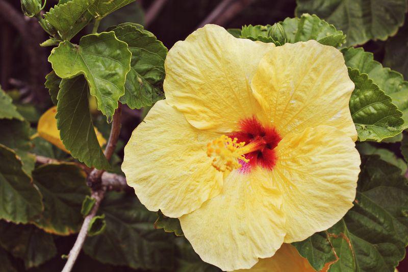 Hawaii 14