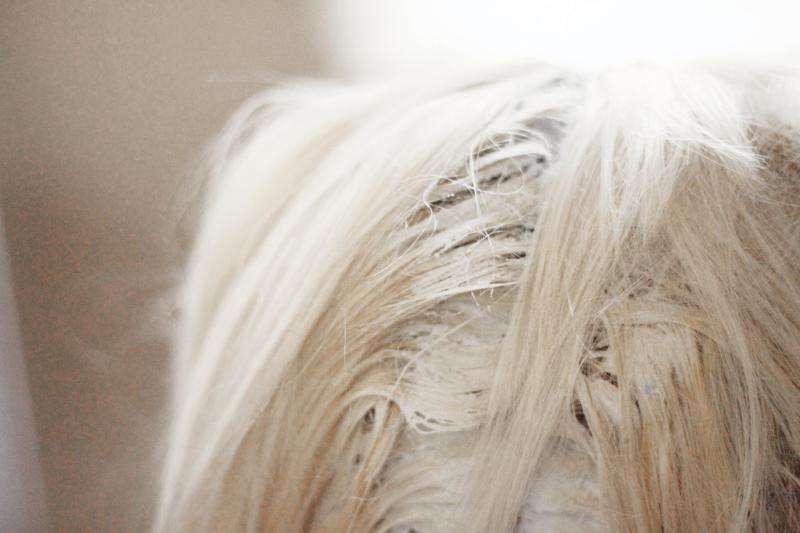 Platinum hair_roots