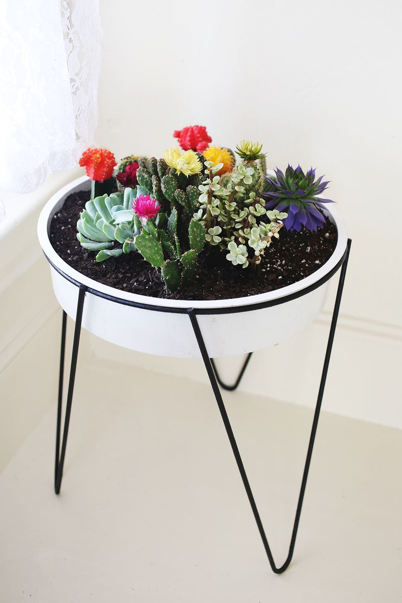 Vintage Planter Filled With Cacti Succulents