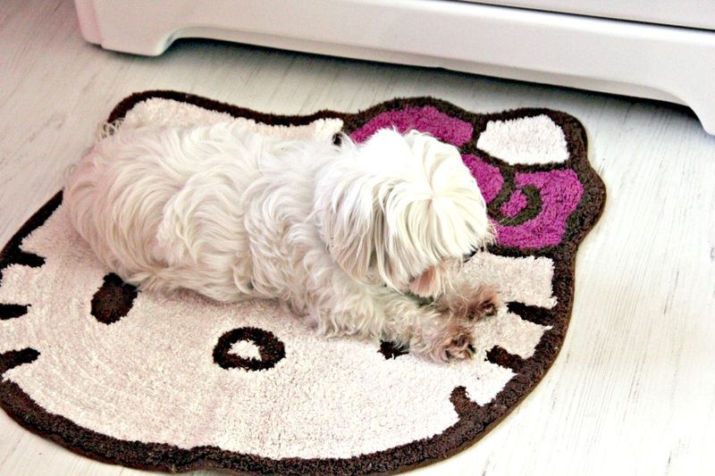 Sweetest pup in a fun hello kitty:pink kitchen