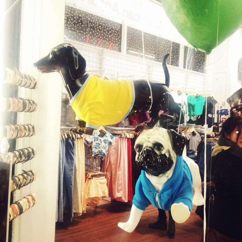 Our doggies twins at American Apparel