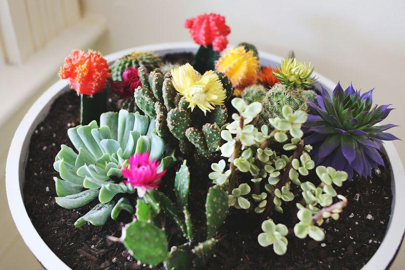 Plants make me happy!