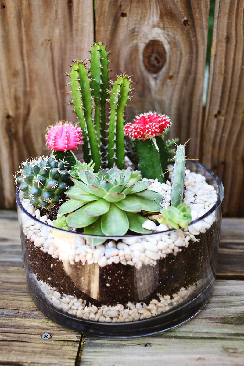 Planting A Simple Cacti Garden A Beautiful Mess