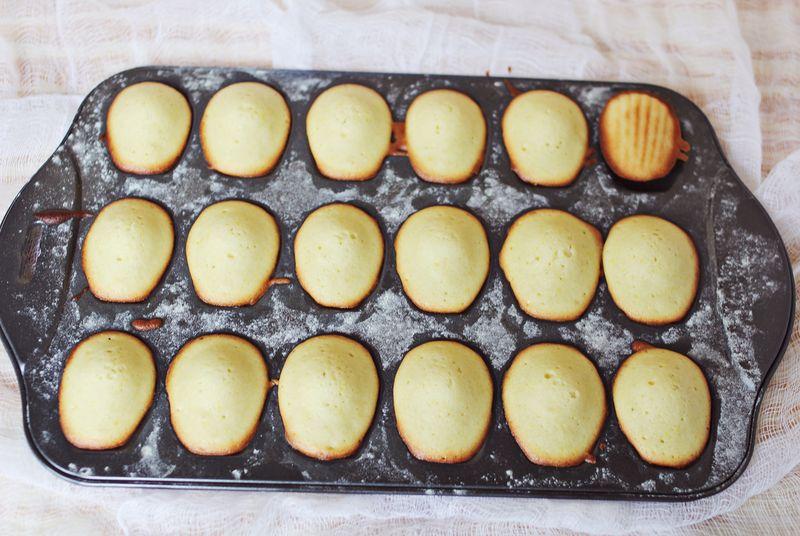 Sea shell cookies!