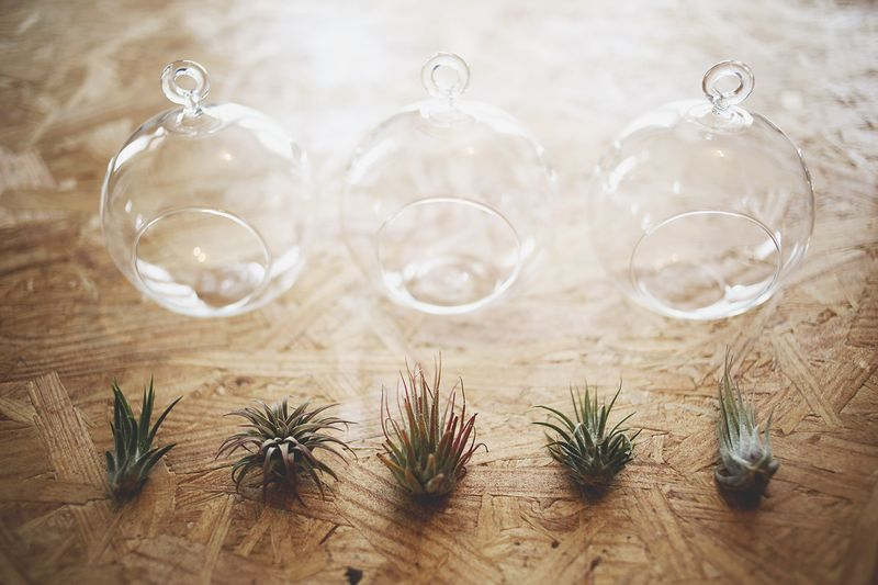 How to Care for Air Plants abeautifulmess.com