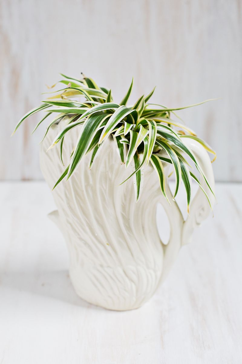 7 Unique Non-Toxic Houseplants