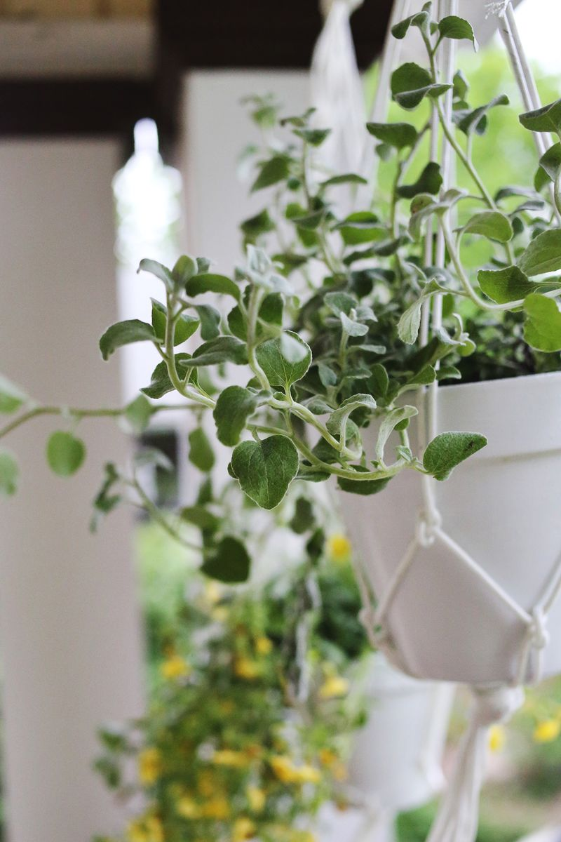 Diyhangingplanters