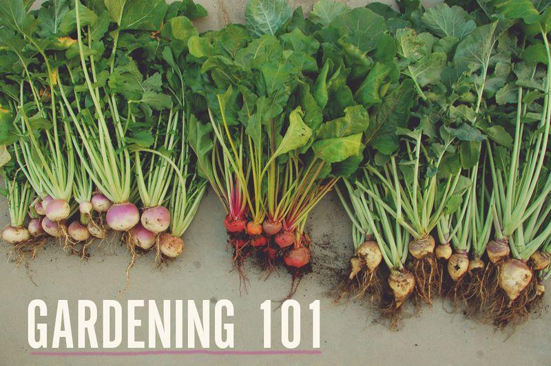 Gardening101