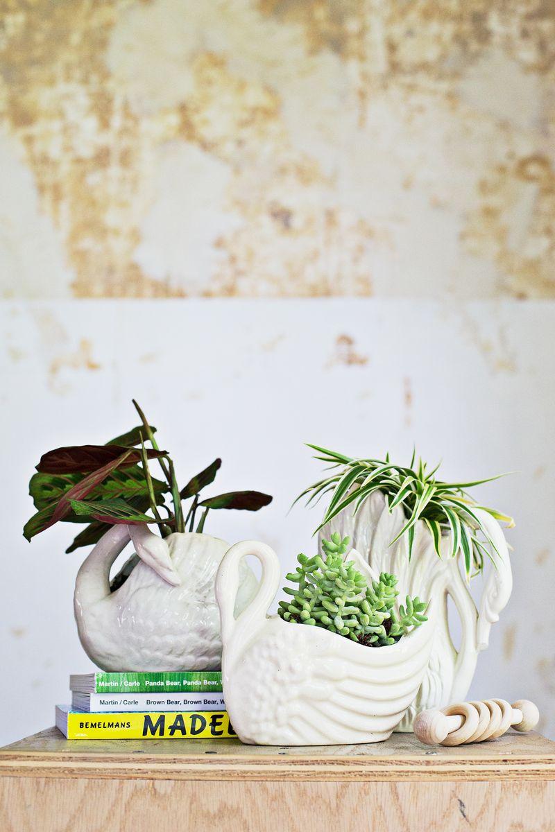 7 Unique Non Toxic Houseplants A Beautiful Mess