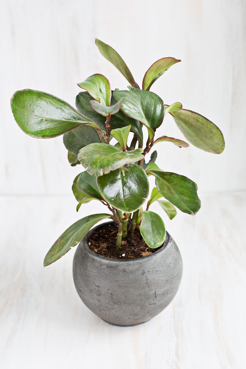 7 Unique Non Toxic Houseplants A