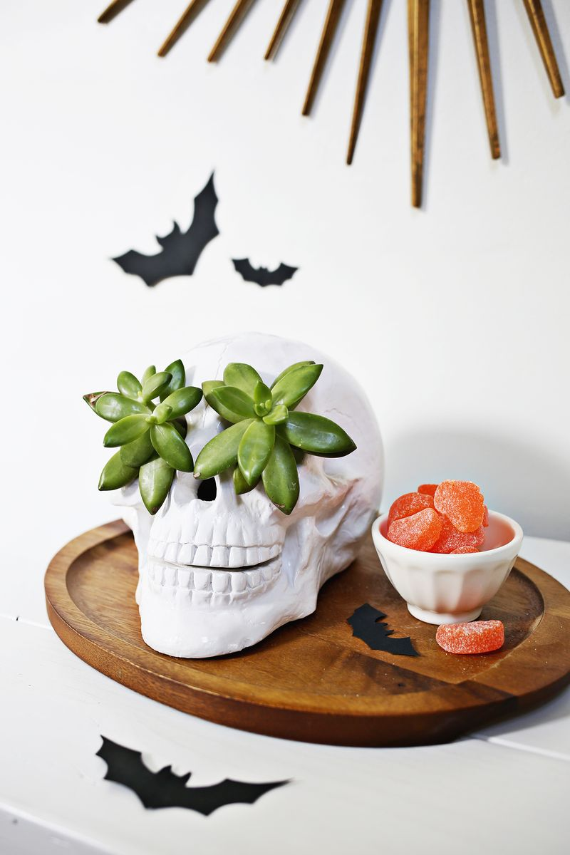 Try This Skull Succulent Planter A Beautiful Mess