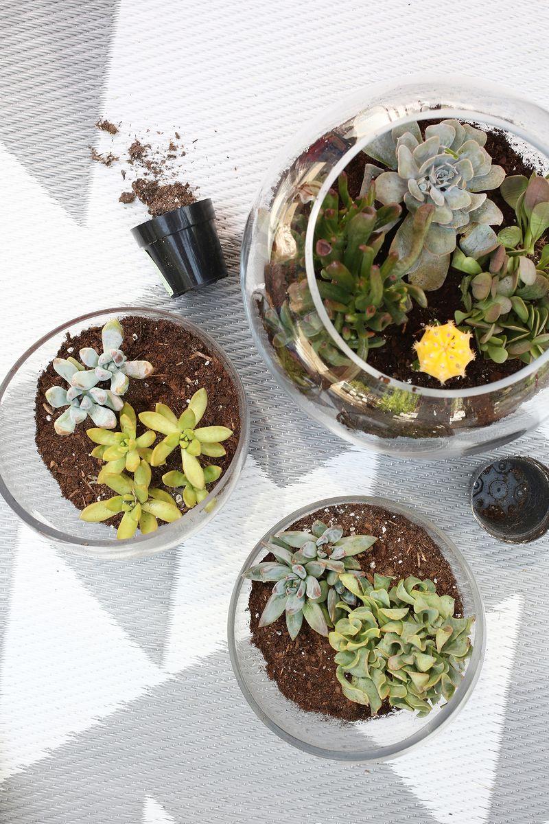 Try This! Aquarium Rock Planter (clilck through for more)