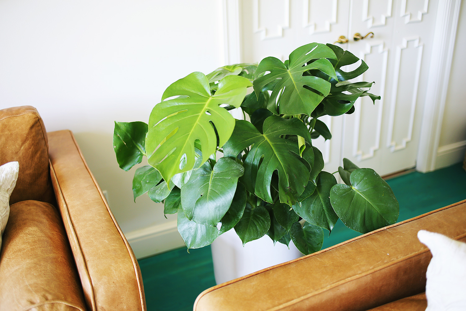 Five EASY To Care For Houseplants