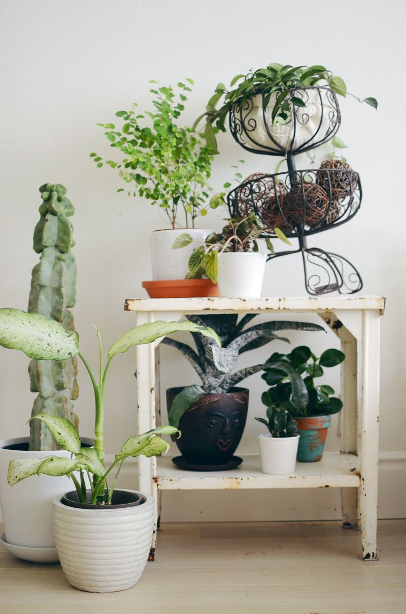 Tips For Keeping Indoor Plants Alive A Beautiful Mess